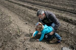 Picking asparagus with Daddy.